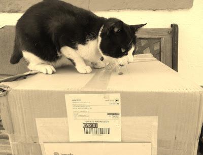 Pepeted, a ração que o meu gato adora!