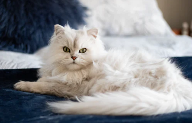 You must know pet medicine to keep pets strong and healthy