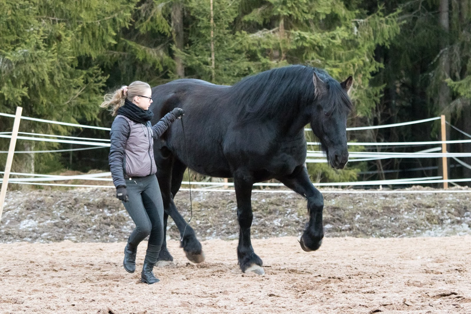 Hevosen Lopetus