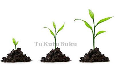 Perkembangan Tumbuhan, pengertian pertumbuhan dan perkembangan tumbuhan menurut para ahli, makalah pertumbuhan dan perkembangan tumbuhan, faktor yang mempengaruhi pertumbuhan dan perkembangan tumbuhan, perbedaan pertumbuhan dan perkembangan tumbuhan, pengertian pertumbuhan dan perkembangan pada tumbuhan, pengertian pertumbuhan dan perkembangan tanaman