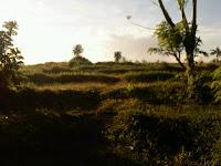 Tanah dijual di Beraban Kediri Tabanan
