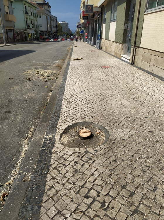 Árvore derrubada
