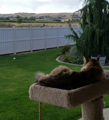 perch cat watching doves