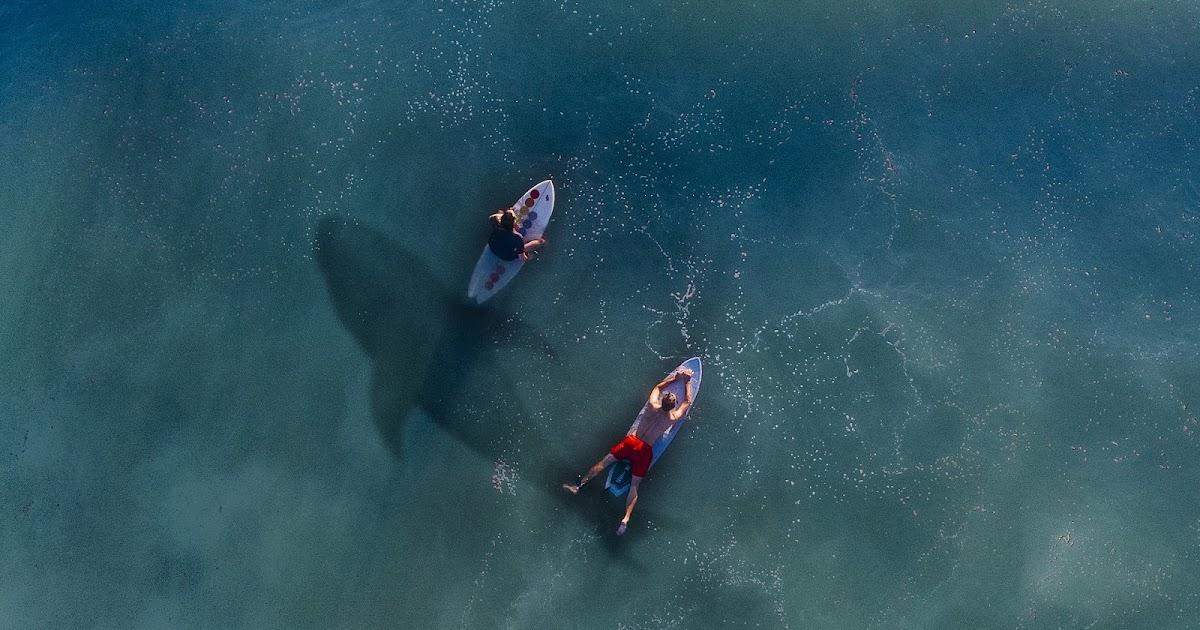 La carta que los tiburones africanos mandaron al parlamento británico