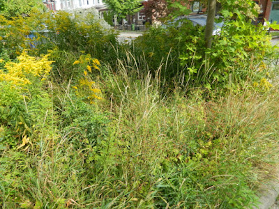 Little Italy Fall Front Garden Cleanup Before by Paul Jung Gardening Services--a Toronto Organic Gardener