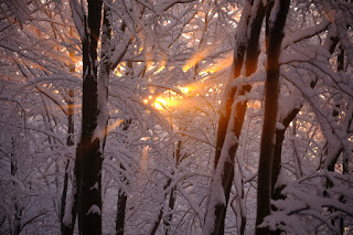 The sun shining though snow-covered tree branches. Photo by Kristjan Kotar.