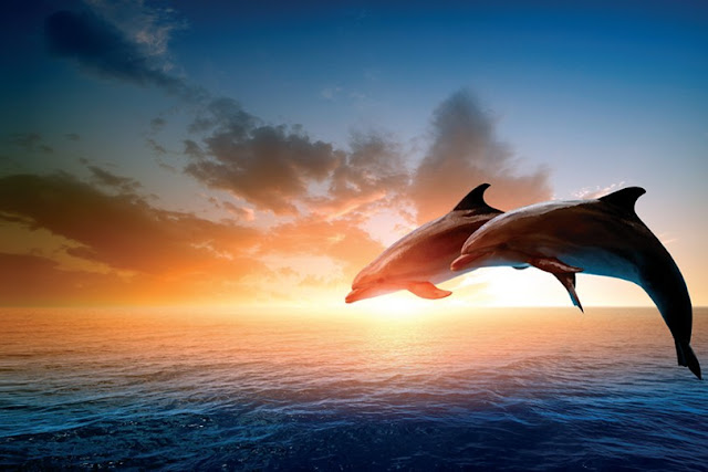 Rüyada Yunus Balığı Görmek
