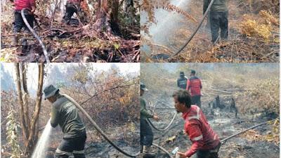 Tim Fire Fighter PT RAPP Bantu Padamkan Karhutla di 5 Lokasi di Siak