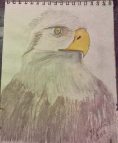Eagle sketch by Gloria Poole in graphite and watercolor on paper. year 2008.