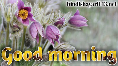 Latest new beautiful good morning flowers images