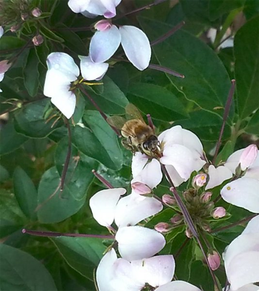 High number of pesticides within colonies linked to honey bee deaths