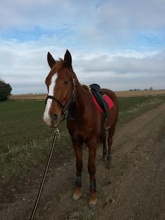 Débourrage jeune cheval
