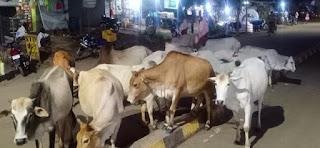 आवारा पशु पहुंचा रहे किसान की फसल को नुकसान, नही दे रहा कोई ध्यान