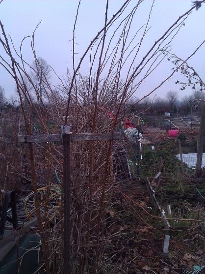 January Garden Chores
