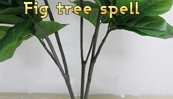 Fig Tree spell