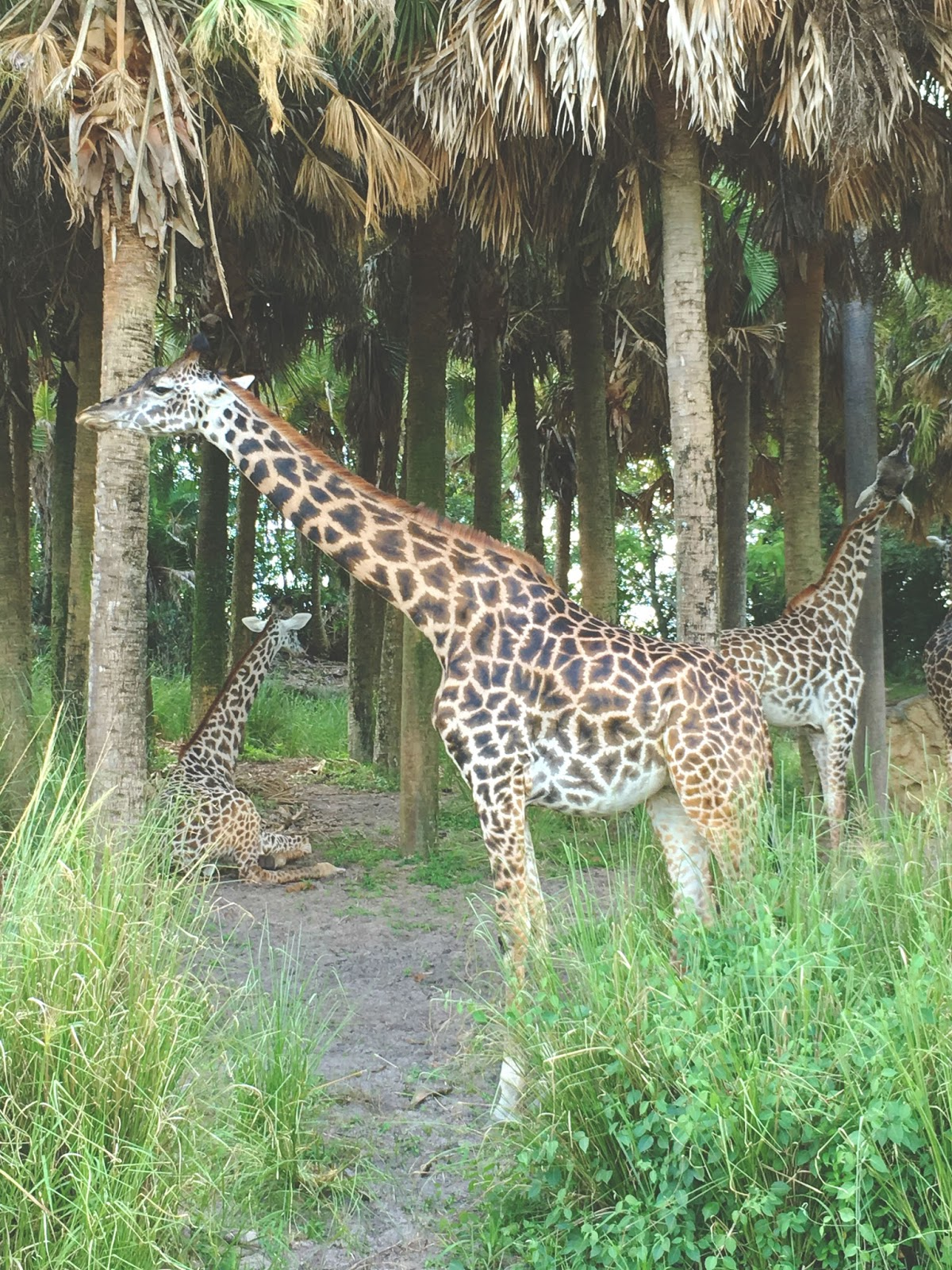 safari at Animal Kingdom in Disney World, Florida