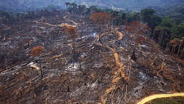 Deforestación de Amazonía brasileña aumenta 103,7 % en noviembre