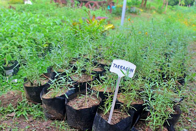 Organic Farms in Quezon