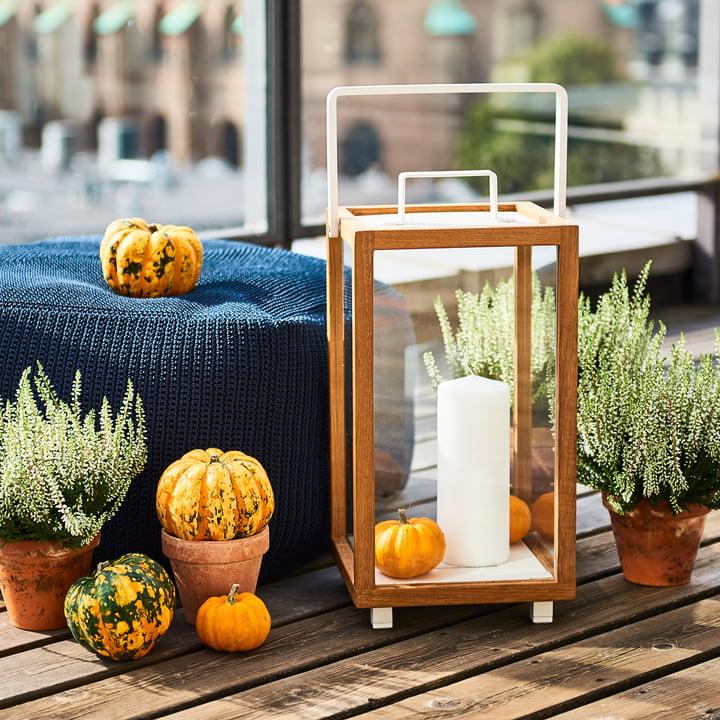 szklane terrarium na kwiaty