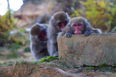 Monkey Park Iwayatama