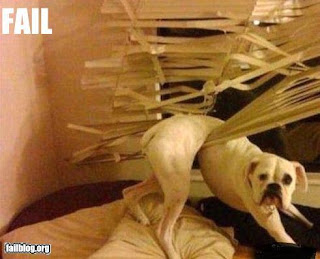 STUPID DOG stuck in blinds didn't expect you home