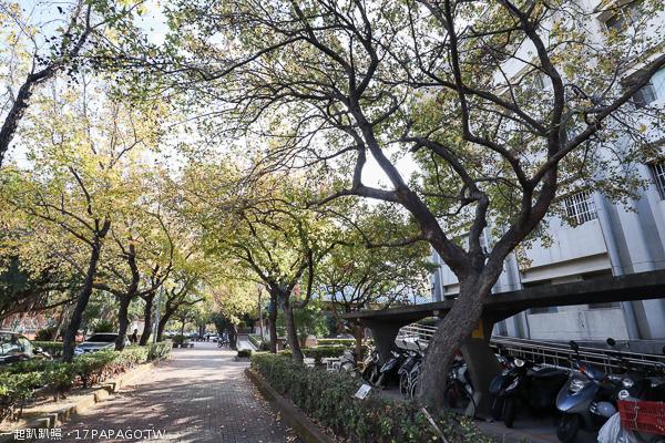 《台中.南屯》黎明新村楓香大道|陽光照射變成浪漫美景|美好書席