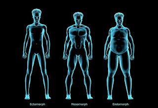 ectomorph, endomorph, mesomorph, different body types