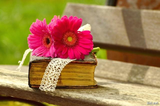 ảnh hoa đẹp rực rỡ đặt trên cuốn sách