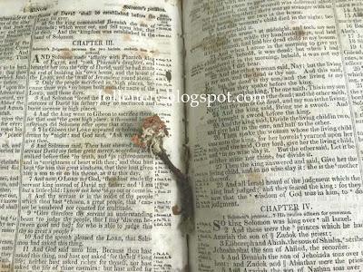Dried flower in Davis Bible https://jollettetc.blogspot.com