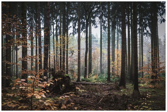 Herbst im Zeitzer Forst