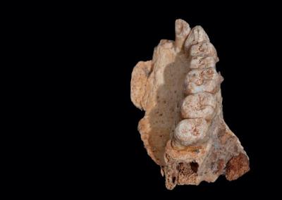 Peneliti Israel Klaim Temukan Fosil Manusia Tertua Di Luar Afrika