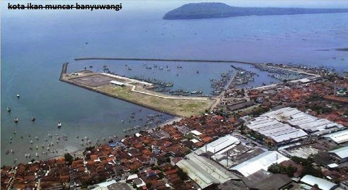 Foto pelabuhan ikan muncar banyuwangi