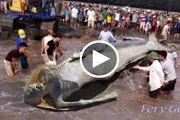 Heboh Dan Aneh Kejadian Rakaman Ikan Duyung Yang Sebenar Betulbetul Tidak Dapat Percaya Mata Sendiri