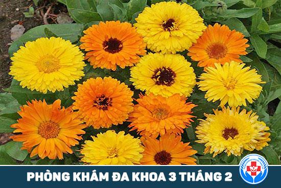 HCM - 5 loại thảo dược mà bạn có thể trồng tại ban công 5-loai-thuoc-thao-duoc-ma-ban-co-the-trong-tai-ban-cong