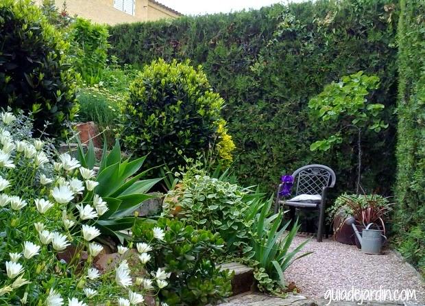 Rejuvenecer un seto de thuja guia de jardin - Setos de jardin ...