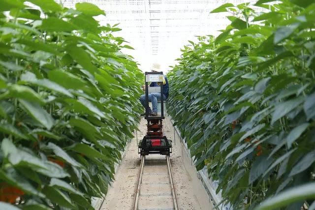 Manfaat IoT juga Teknologi Blockchain di Bidang Pertanian-13