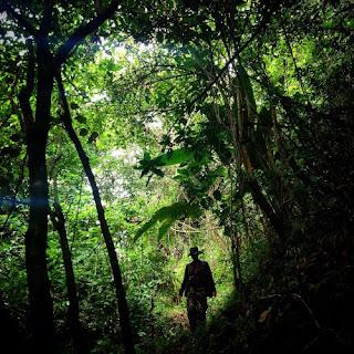 Los bosques son lugares hermosos si se visitan  en paz y con amor, pero si se visitan con miedo,  ese mismo miedo los convierte en lugares  peligrosos y amenazadores.