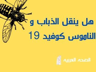 هل ينقل الذباب و الناموس فيروس كورونا