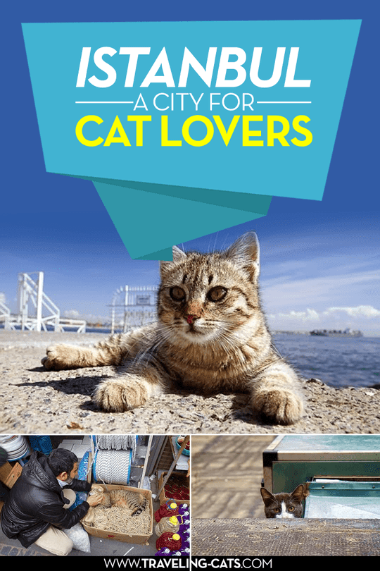 istanbul city for cat lovers