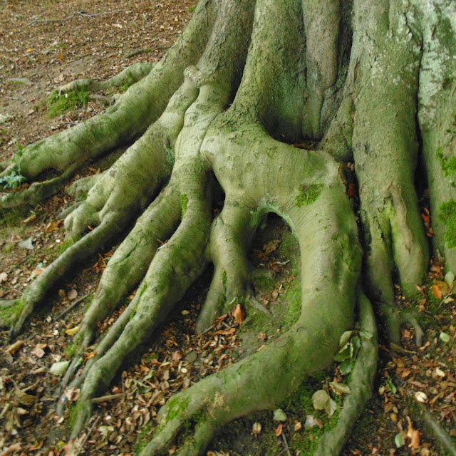Tree roots, Newmillerdam