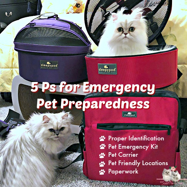 two persian cats with sleepypod