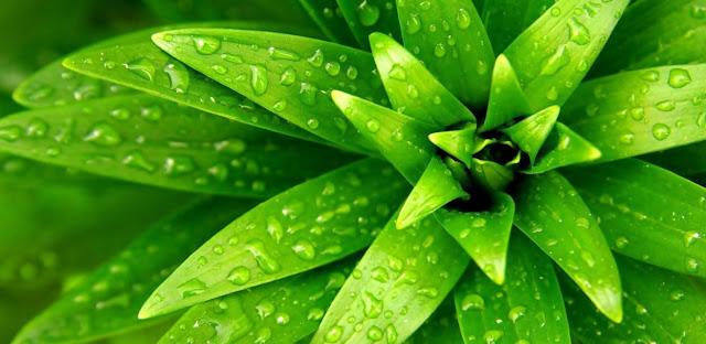 Plantas y botanica