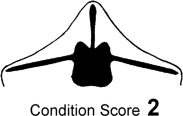 BCS-2