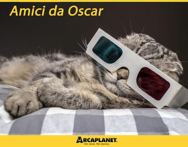 True Feline Good Blog Cani E Gatti Al Cinema Attori Per Caso O