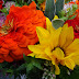Sunday Flowers #246