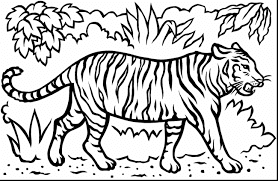 Sumatran Tigers Coloring Pages For Kids
