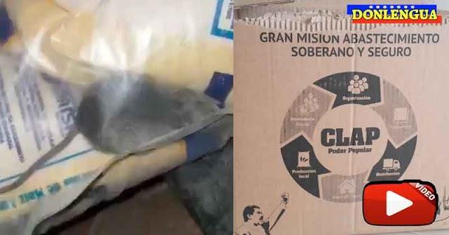 Régimen de Maduro incluye en sus bolsas CLAP un Hamster para que tus hijos jueguen