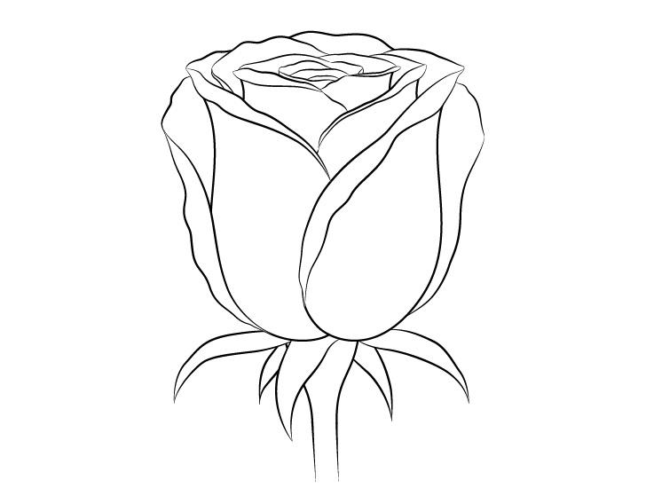 Gambar garis bunga mawar