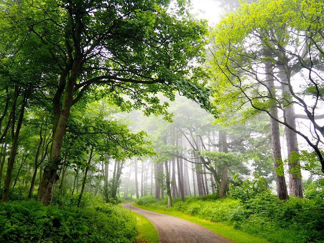 Woodland walking path in Dalmeny Estate Shore Walk in north Edinburgh