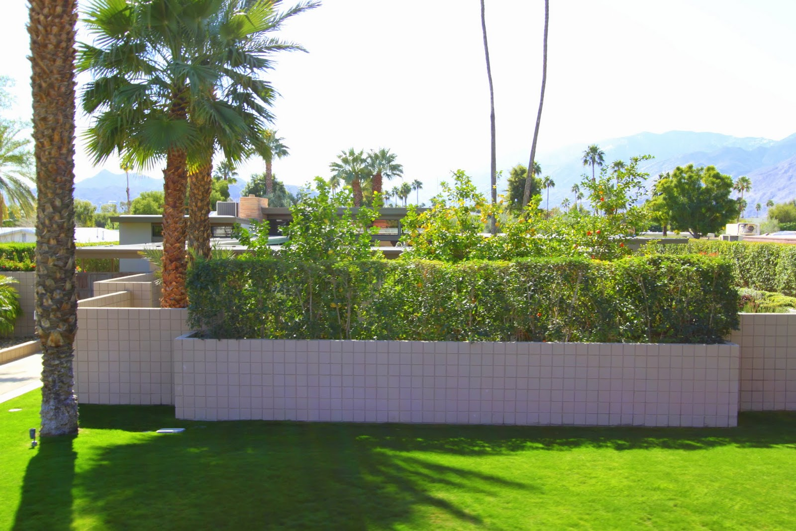Sichtschutz Garten Niedrig Psmw Palm Springs Modernism Week The Hedge Tour Mid